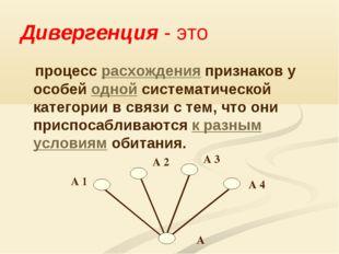 Дивергенция - это процесс расхождения признаков у особей одной систематическо