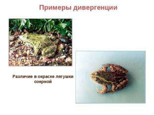 Примеры дивергенции Различие в окраске лягушки озерной