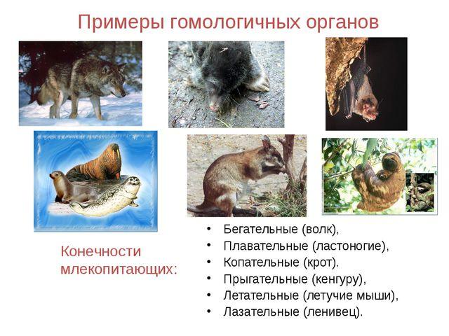 Примеры гомологичных органов Бегательные (волк), Плавательные (ластоногие), К...