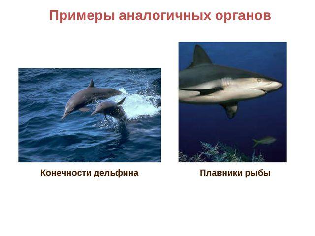 Примеры аналогичных органов Плавники рыбы Конечности дельфина