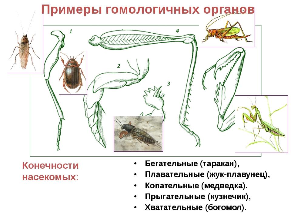 biology analogy