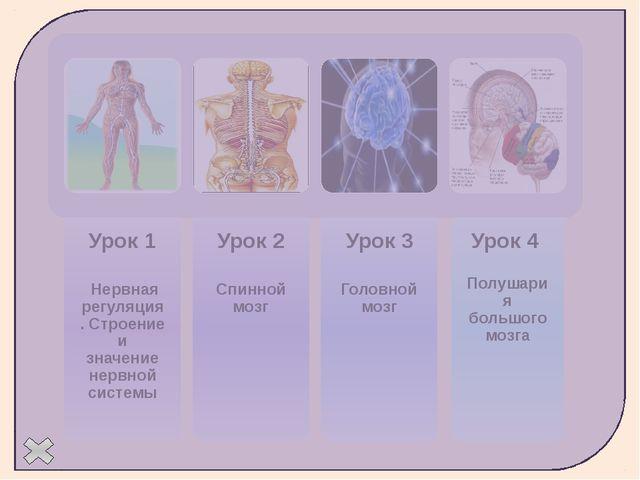 Строение нерва Пучки нервных волокон Кровеносные сосуды Аксон Нервный узел С...