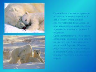 Самки белого медведя приносят потомство в возрасте от 4 до 8 лет и имеют очен