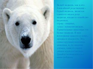 Белый медведь, как и его ближайший родственник - бурый медведь, является одни