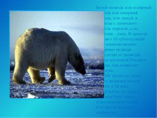Белый медведь или полярный медведь или северный медведь, или ушкуй, в перевод