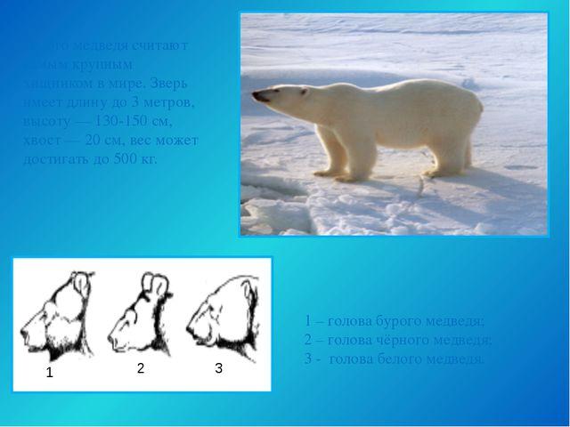 Белого медведя считают самым крупным хищником в мире. Зверь имеет длину до 3...
