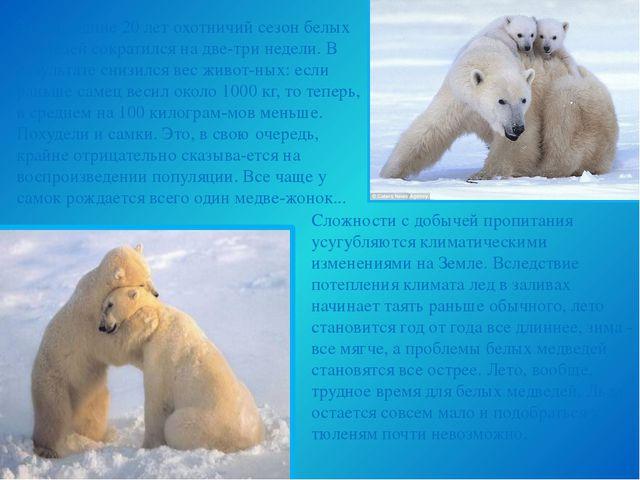 За последние 20 лет охотничий сезон белых медведей сократился на две-три неде...