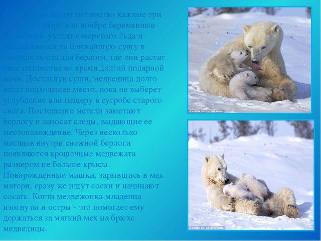 Самки производят потомство каждые три года. В октябре или ноябре беременные м...
