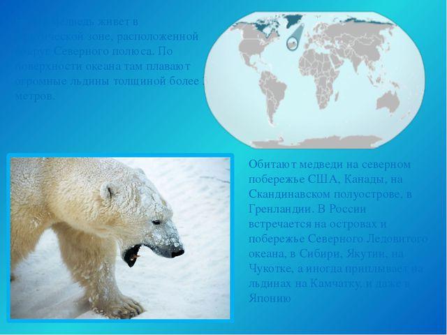 Обитают медведи на северном побережье США, Канады, на Скандинавском полуостро...