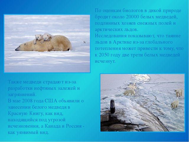 Также медведи страдают из-за разработки нефтяных залежей и загрязнений. В мае...