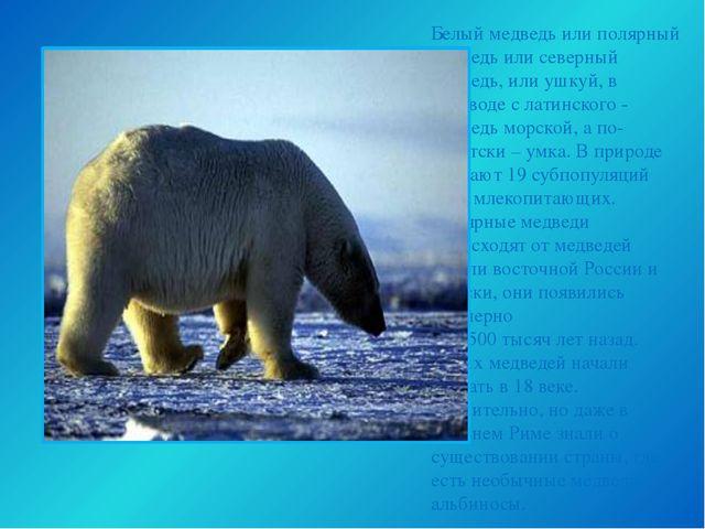 Белый медведь или полярный медведь или северный медведь, или ушкуй, в перевод...