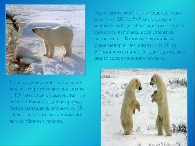 Взрослый самец белого медведя может весить от 350 до 545 килограмм и в возра...