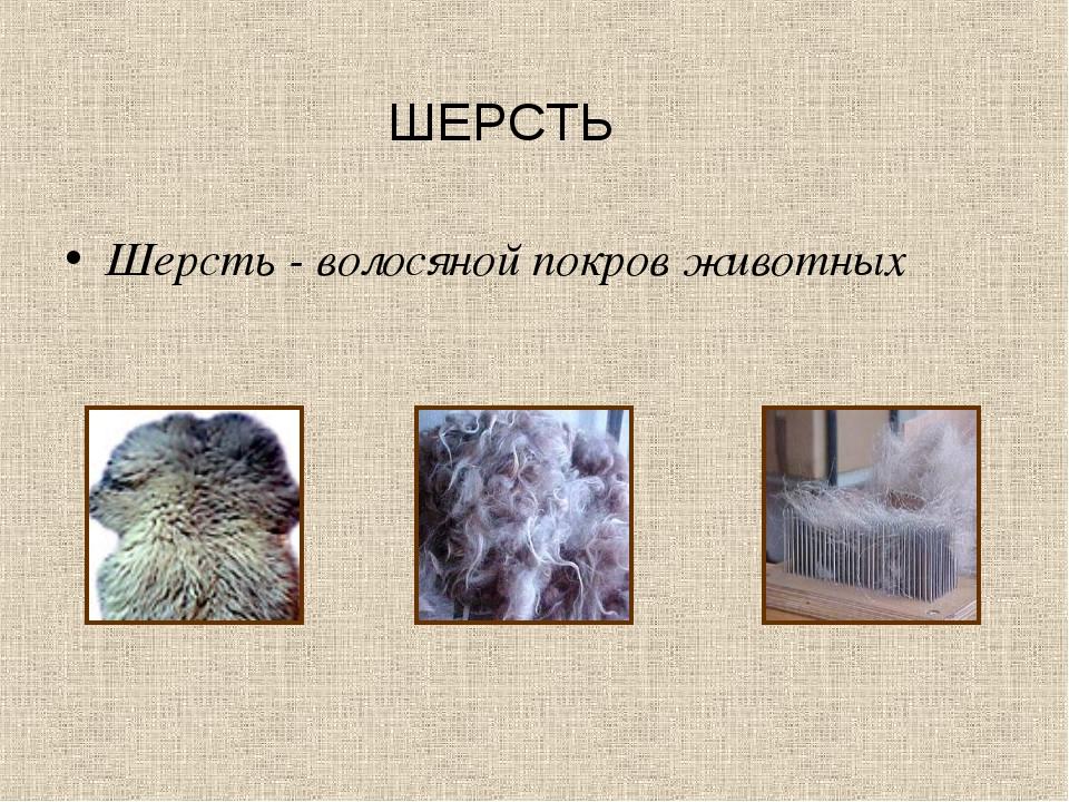 ШЕРСТЬ Шерсть - волосяной покров животных
