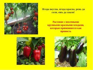 .Ягода вкусна, ягода красна, режь да соли, ешь да хвали! Растение с несочным