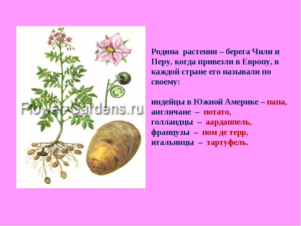 Родина растения – берега Чили и Перу, когда привезли в Европу, в каждой стран...