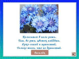 Колосится в поле рожь. Там, во ржи, цветок найдёшь. Ярко-синий и пушистый, То