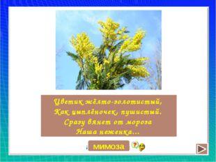 Цветик жёлто-золотистый, Как цыплёночек, пушистый. Сразу вянет от мороза Наша