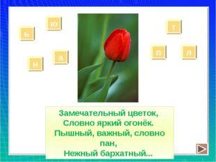 Замечательный цветок, Словно яркий огонёк. Пышный, важный, словно пан, Нежный