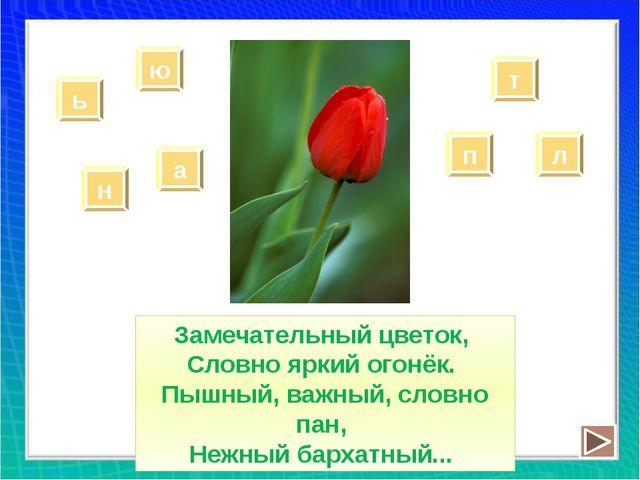 Замечательный цветок, Словно яркий огонёк. Пышный, важный, словно пан, Нежный...