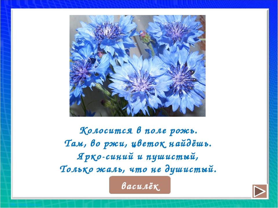 Колосится в поле рожь. Там, во ржи, цветок найдёшь. Ярко-синий и пушистый, То...