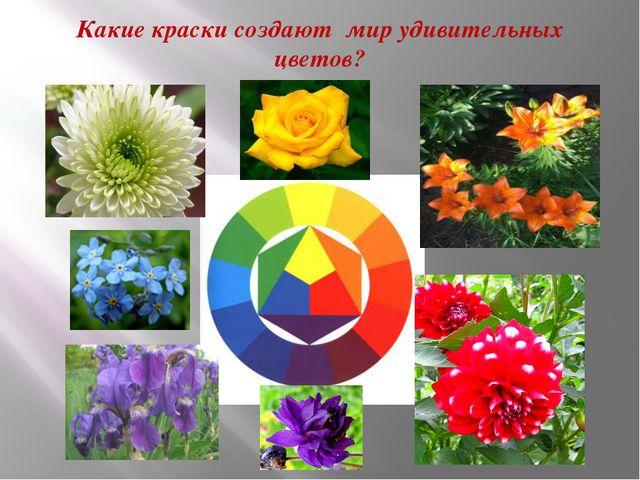 Какие краски создают мир удивительных цветов?