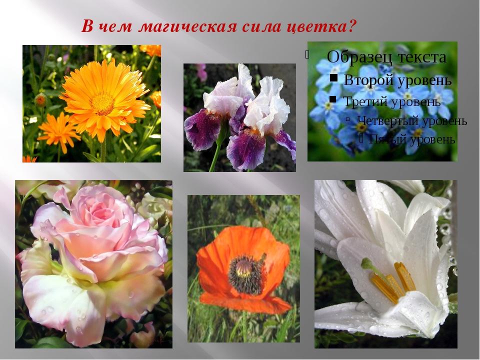 В чем магическая сила цветка?