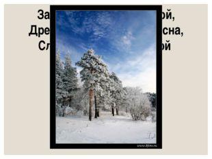 Заколдован невидимкой, Дремлет лес под сказку сна, Словно белою косынкой Под