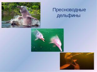 Пресноводные дельфины
