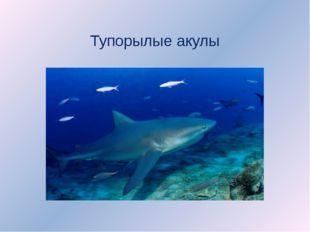 Тупорылые акулы