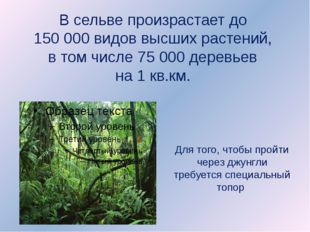В сельве произрастает до 150 000 видов высших растений, в том числе 75 000 д
