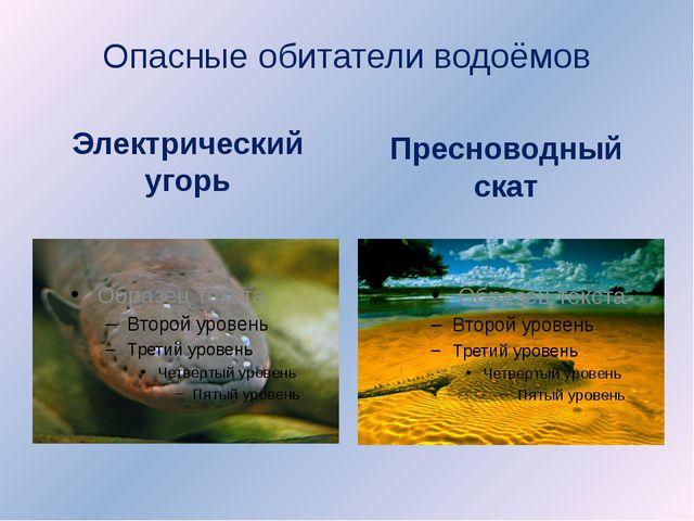 Опасные обитатели водоёмов Электрический угорь Пресноводный скат