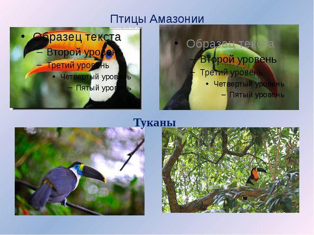 Птицы Амазонии Туканы