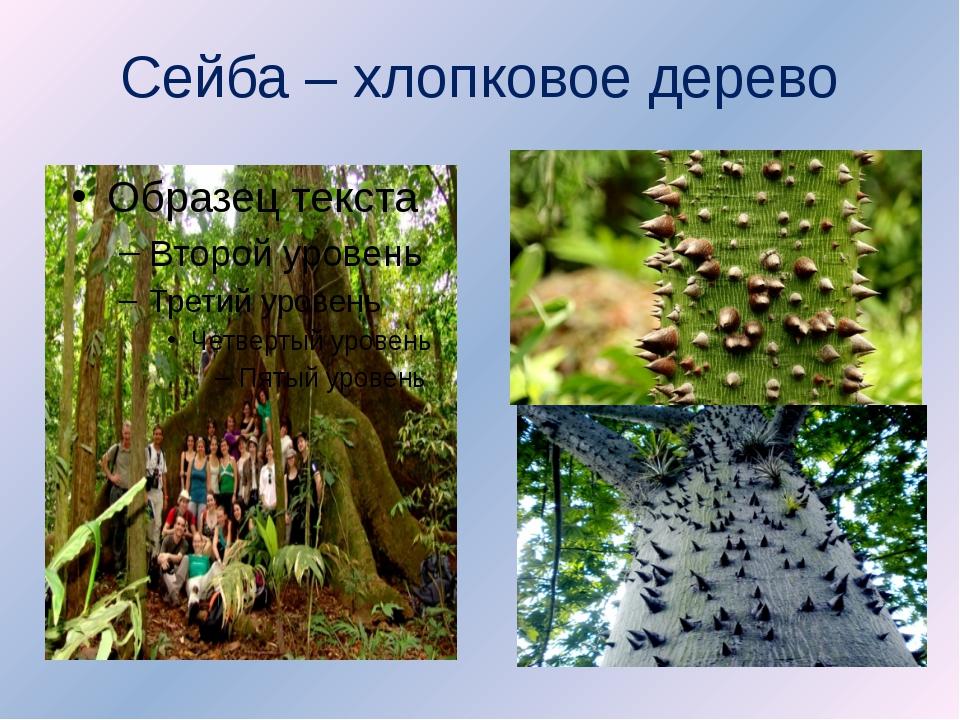 Сейба – хлопковое дерево