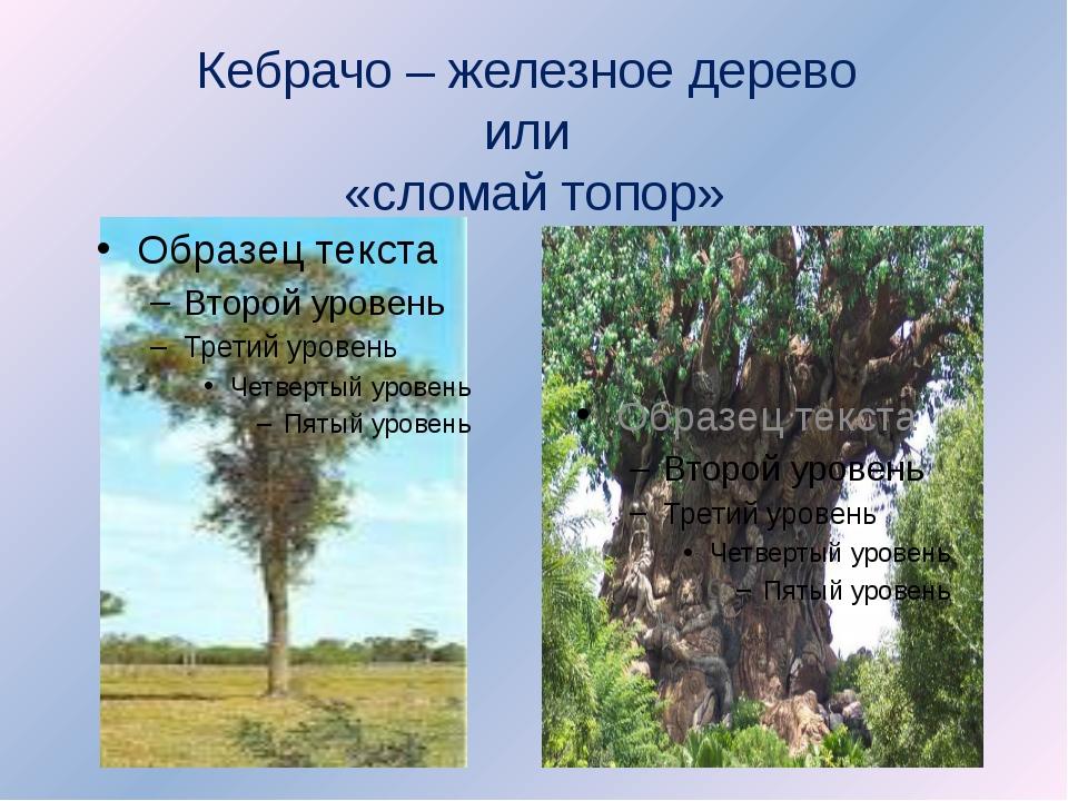 Кебрачо – железное дерево или «сломай топор»