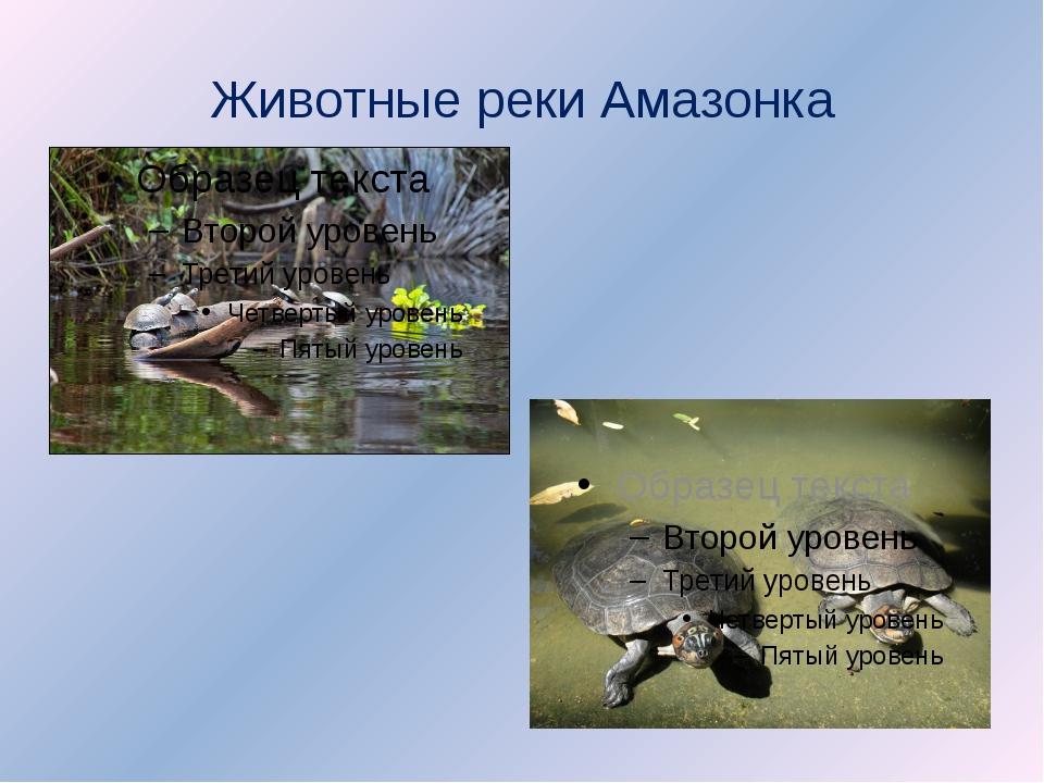 Животные реки Амазонка