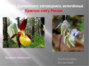 Растения Дарвинского заповедника, включённые в Красную книгу России Венерин б