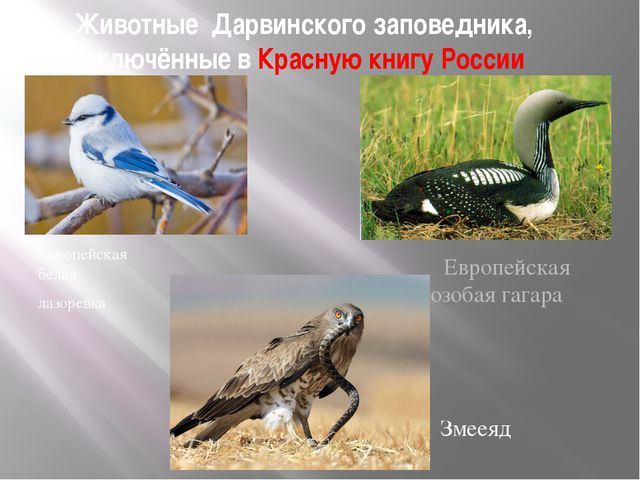 Животные Дарвинского заповедника, включённые в Красную книгу России Европейск...