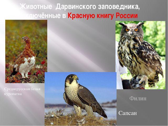 Животные Дарвинского заповедника, включённые в Красную книгу России Среднерус...