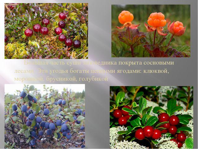 Большая часть суши заповедника покрыта сосновыми лесами. Эти угодья богаты ц...