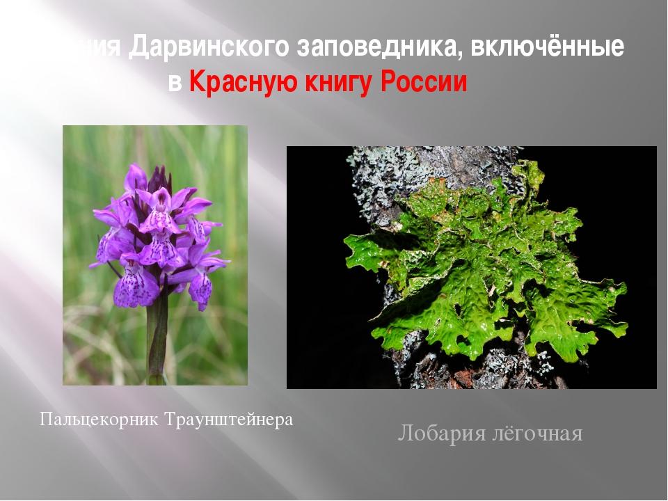Растения Дарвинского заповедника, включённые в Красную книгу России Пальцекор...