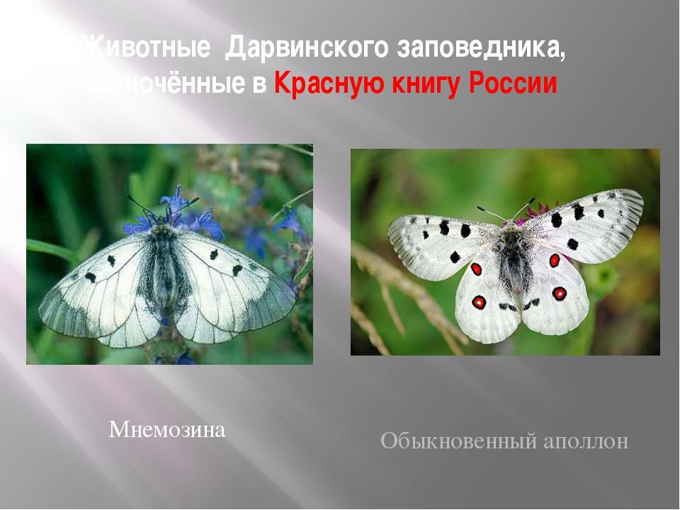 Животные Дарвинского заповедника, включённые в Красную книгу России Мнемозина...