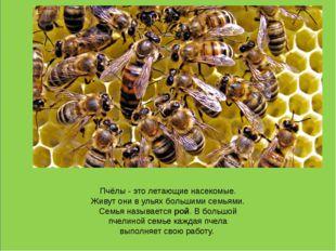 Пчёлы - это летающие насекомые. Живут они в ульях большими семьями. Семья на