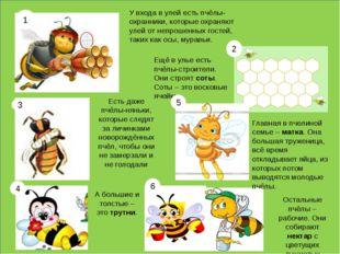У входа в улей есть пчёлы-охранники, которые охраняют улей от непрошенных го