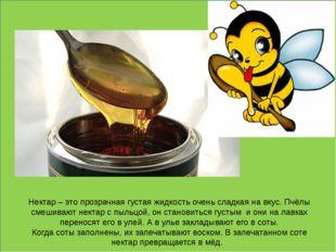Нектар – это прозрачная густая жидкость очень сладкая на вкус. Пчёлы смешива