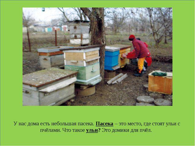 У нас дома есть небольшая пасека. Пасека – это место, где стоят ульи с пчёла...