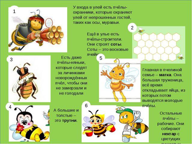 У входа в улей есть пчёлы-охранники, которые охраняют улей от непрошенных го...