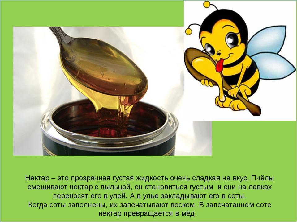 Нектар – это прозрачная густая жидкость очень сладкая на вкус. Пчёлы смешива...