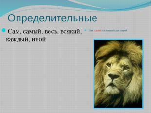 Определительные Сам, самый, весь, всякий, каждый, иной Лев –самый настоящий ц