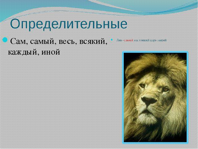 Определительные Сам, самый, весь, всякий, каждый, иной Лев –самый настоящий ц...