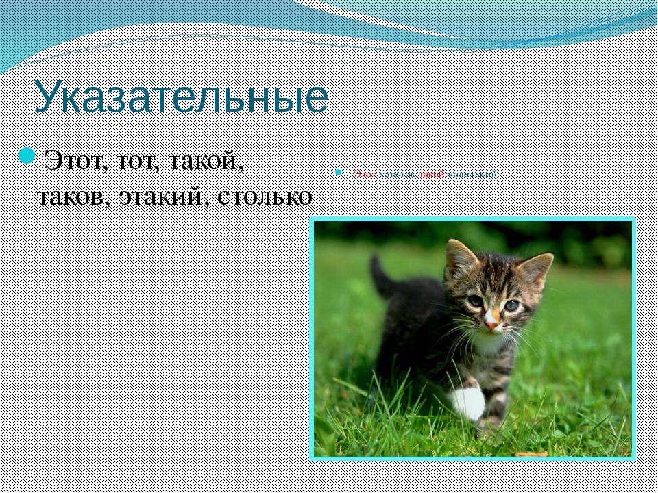 Указательные Этот, тот, такой, таков, этакий, столько Этот котенок такой мале...
